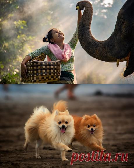 Счастье — это состояние души в момент полной гармонии с самим собой | Калейдоскоп новостей | Яндекс Дзен