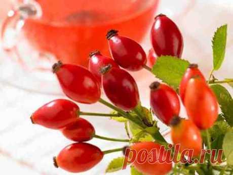 Оздоровительные напитки из плодов шиповника