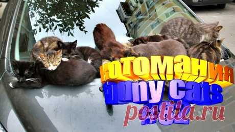 смешные коты видео, коты видео смешное, видео смешной кот, кот смешное видео, кот том видео, коты видео, видео приколы котов, для кота видео, говорящие коты видео, видео смешные животные, видео животных смешные, смешное животное, животные смешно, про животных смешных, приколы коты, прикол котов, приколы с котом, кошки видео смешное, смешное видео кошки, смешное про кошек, смешное видео кошек, смешные видео кошек, кошки смешное, смешно кошка, видео кошки смешные, кошки и смешные