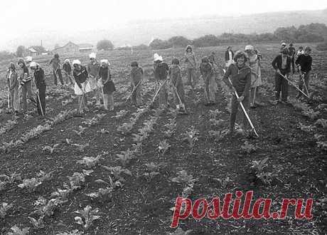Фото эпохи СССР (39 фото) » Триникси