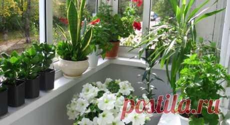 А вы хотите роскошный цветник в квартире? Вот вам 10 секретов. — Мир Растений