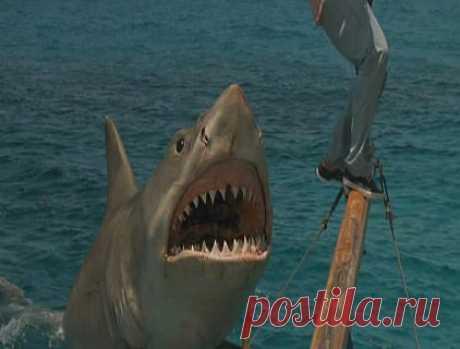 Энергичные за счет более теплой крови. Кровеносная система семейства ламновых, или акул, в которые входят акулы-мако, атлантические, сельдевые и белые акулы, резко отличается от кровеносной системы всех других акул. Температура их тела на 3—5 градусов по Цельсию выше температуры воды. За счет этого ускоряется процесс переваривания пищи, возрастает сила и выносливость акул.Мако, питающиеся юркими морскими рыбами, например тунцом, способны совершать резкие броски и развивать скорость до 100 км/ч.