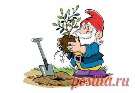 8 СЕКРЕТОВ ДЛЯ САДОВОДОВ 1. Йод для капусты В ведро воды добавить 40 капель йода. Когда начнет формироваться кочан, поливать капусту под растение по 1 литру. 2. Ускорение пророста Чтобы семена быстрее проросли их замачивают в растворе перекиси водорода (4%) на 12 часов (капуста), а семена помидоров и свеклы - на 24 часа. Для обеззараживания семян (вместо марганцовки) их обрабатывают 10% перекисью водорода 20 минут. Соотношение раствора и семян 1:1. Затем семена промывают и просушивают. 3. Ч