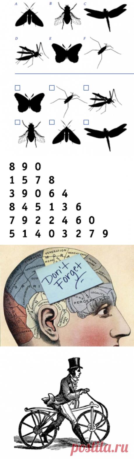 Вспомнить всё: пять упражнений для улучшения памяти   Блог издательства «Манн, Иванов и Фербер»