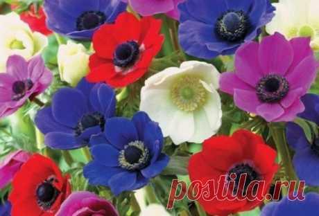Какие цветущие многолетники нужно делить и пересаживать весной