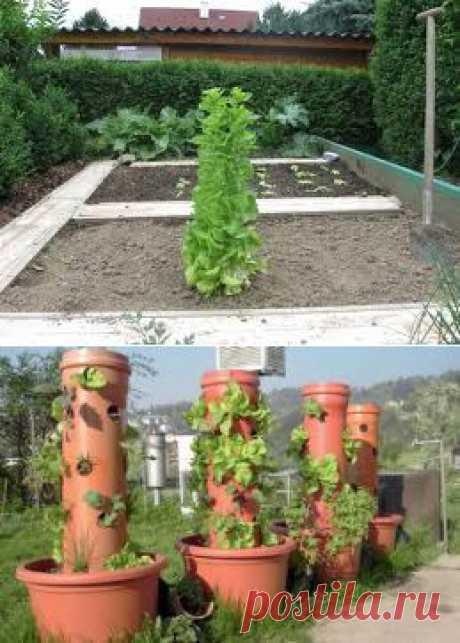 Vertical kitchen garden. - Search in Google