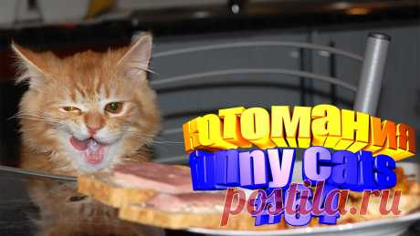 смешные коты видео, смешные видео котов, смешной кот видео, смешное видео котов, видео для котов, коты видео, коты приколы видео, кот видео, видео с котом, смешные животные видео, животные смешное видео, смешное видео животные, видео смешное животных, про животных смешных, приколы коты, приколы для котов, приколы котами, кошки видео смешное, смешное видео кошки, смешное про кошек, про смешных кошек, видео кошек смешные, кошка видео смешное, смешное кошка видео, смешное о кошках, кошки и смешные