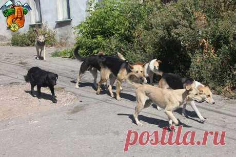 Как на меня напала стая собак во время утренней пробежки. Советы из личного опыта, как с ними справиться