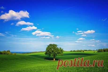 Дерево, поле, равнина, зеленый, небо, одинокое, день, лето обои для рабочего стола windows