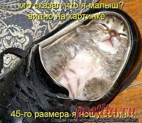 Котоматрица: 45-го размера я ношу ботинки  кто сказал что я малыш?  видно на картинке
