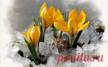 С первым днём весны!
