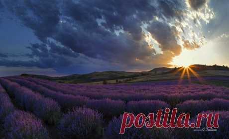 «Лавандовая роскошь». Болгария. Автор фото: Алёна Делина.