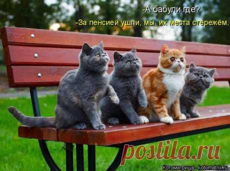 МЕСТО СТЕРЕЖЁМ | KotoMail.ru