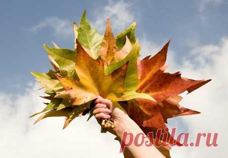Красивые поделки из листьев для совместного творчества с детьми Осень — лучшее время для создания всевозможных поделок своими руками! Просто выходишь на улицу — куда ни глянь материалы для творчества в виде каштанов, желудей, шишек и осенних листьев.