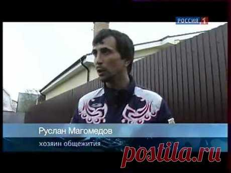 Дагестанское быдло качает права на РУССКОЙ ЗЕМЛЕ - YouTube