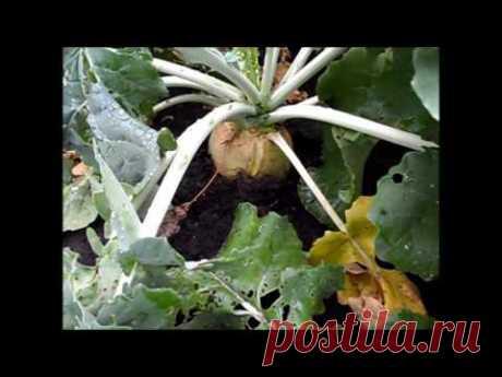 Вкусный Огород: Мой участок, 15 сентября