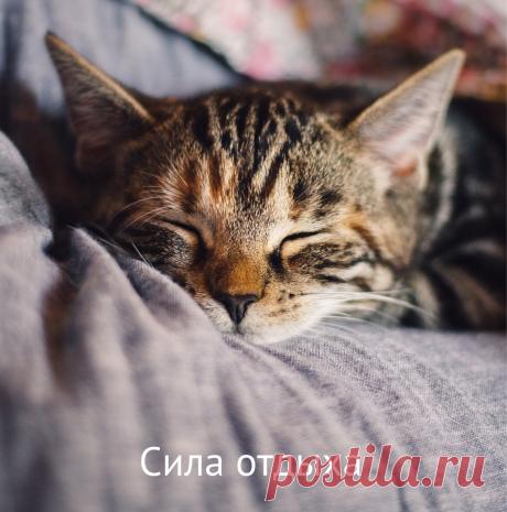 Сила отдыха. Как спалось? То, как пройдет день, во многом определяет вечер предыдущего дня. Во сколько лег, как спал, как подготовился к новому дню. ⠀ Чтобы день был хорошим и продуктивным, надо, чтобы хорошим был вечер. #силавесны#энергиядляжизни#расслабление