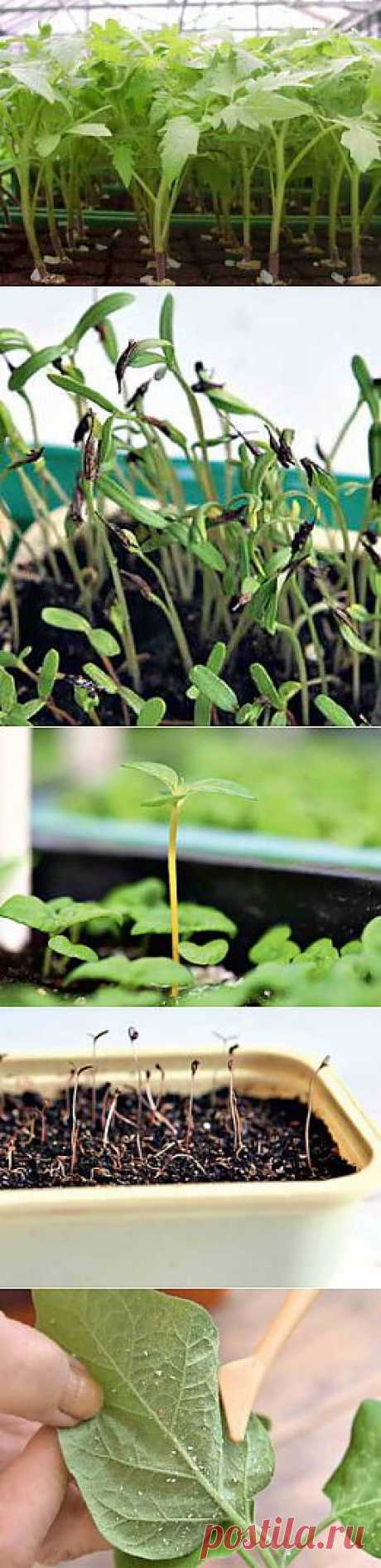 Проблемы с рассадой и пути их решения | Дача - впрок