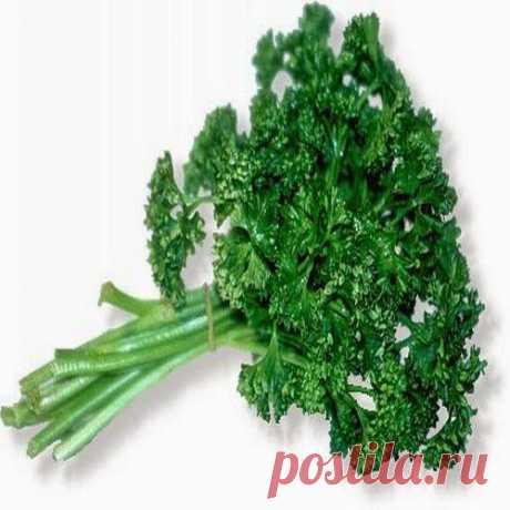 Про петрушку-лекаря. В народной медицине свежая зелень, корни и семена петрушки используются для улучшения аппетита, при метеоризме, при лечении желчнокаменной и почечнокаменной болезни, простатита, сердечных отеков.