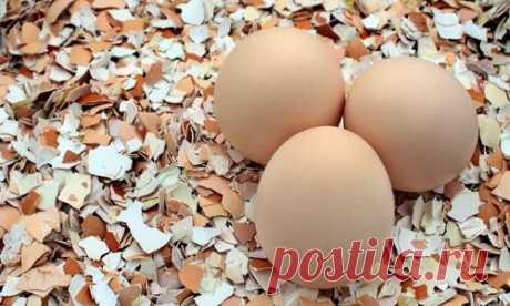Яичная скорлупа: полезное применение в саду и на огороде