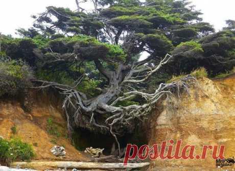 Дерево цепляется за жизнь 😳