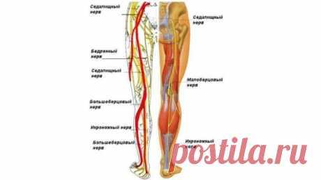 Если защемило нерв в спине, ЧТО делать В 90% случаев защемление происходит по вине чрезмерной нагрузки на спину. Это может быть как разовое превышение нормы – например, поднятие непомерной тяжести, так и периодическое стрессовое воздействие на спину. Наверняка многим людям доставляла неудобство подобная проблема: внезапно защемило нерв на спине. Причем болевые ощущения могут возникать и пропадать спонтанно, так что человек по природе своей не придаст этому значения. И напр...