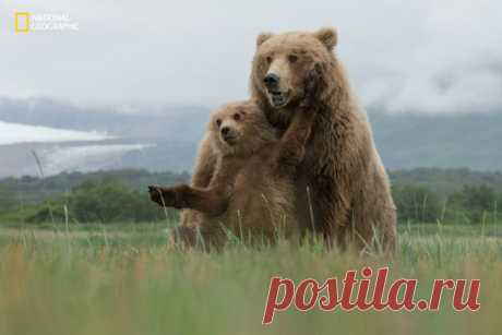 Gallery.ru / Фото #60 - Лучшие фотографии конкурса National Geographic - Vladikana