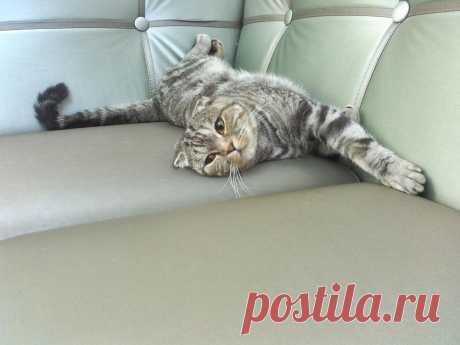 Такой большой диван... и весь мой :)