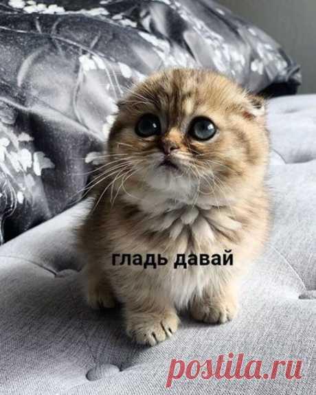 Букет котят