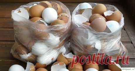Яичная скорлупа. Лучшие способы применения — Садоводка