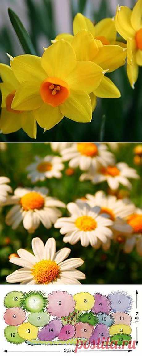 Солнцелюбивые многолетники. Что посадить на солнце | Любимые цветы
