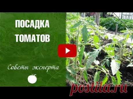 Посадка томатов в открытый грунт 🌟 Хитрый способ посадки рассады на HitsadTV❗