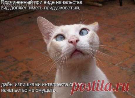 В меру активные и в меру отдыхающие... | KotoMail.ru