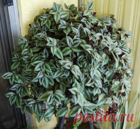 Растение, которое очищает и увлажняет воздух в помещении | Все о домашних цветах | Яндекс Дзен