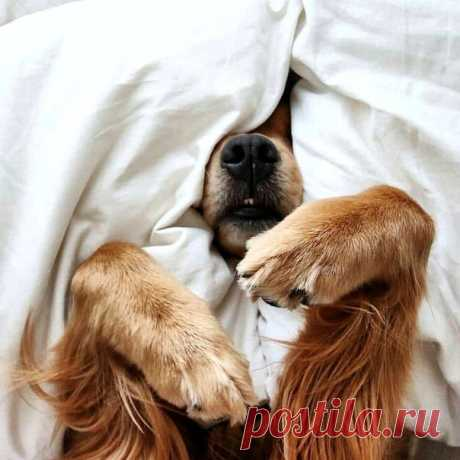 Всем, кто тоже выспаться хочет Я желаю: «спокойной ночи!» Одеялом теплым укройтесь И к Морфею спешите в гости!