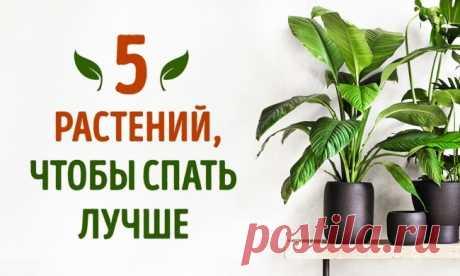 5 растений, которые помогут лучше спать.