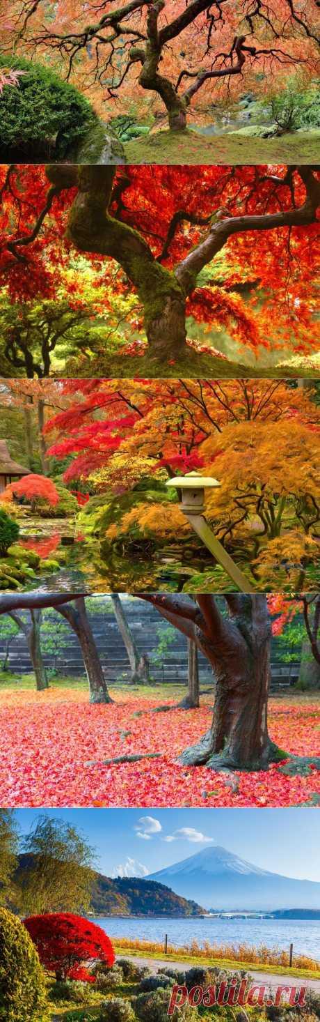 ЯПОНИЯ: ДЕГУСТАЦИЯ ОСЕНИ | МУЗА НАШЕГО ДВОРА
