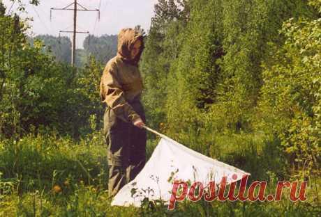 Осторожно! Клещи! (Что делать если вас укусил клещ, как защитить себя и свой участок) — Огород без хлопот