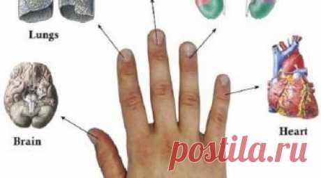 Каждый палец связан с двумя органами: японский метод лечения за 5 минут! Всего 5 минут и вы почувствуете облегчение!