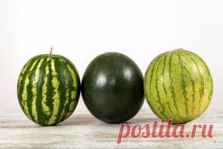 Выращивание арбузов в открытом грунте: пошаговая инструкция | Другие растения (Огород.ru)