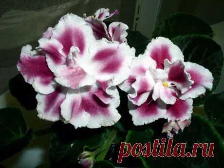 10 растений, которые принесут в ваш дом любовь. -  zaripowa.aniuta— я.ру