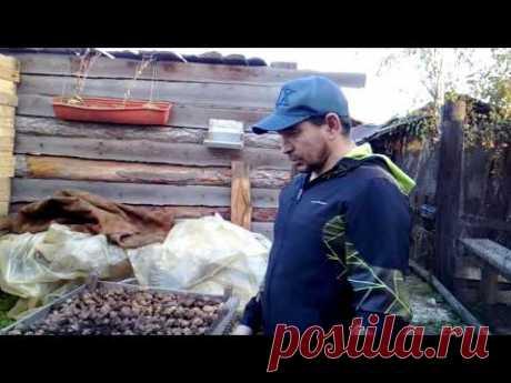 копаете картоху!?? подскажу как сушить быстрее!!! - YouTube