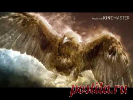 Денежный канал   Золотой орел .от Алики