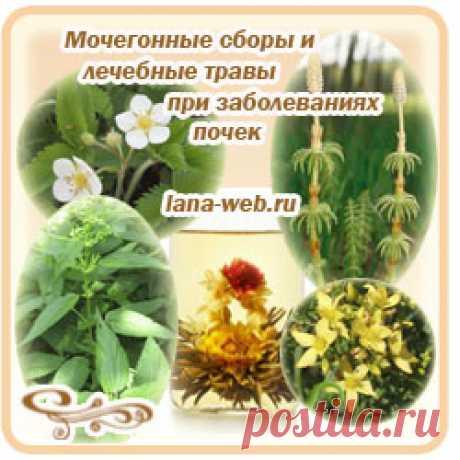 Лекарственные травы для лечения и очищения почек.