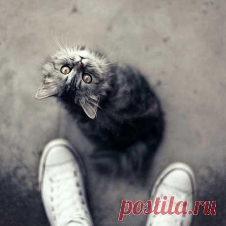 Лучшие фотографии животных с 500px.com