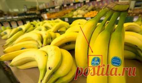 О том, что бананы вредны поставщик «пишет» на фрукте, а мы этого не замечаем | Не ешь меня | Яндекс Дзен