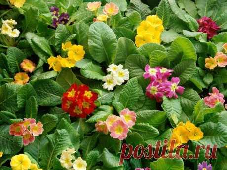 Фотографии цветов - Цветы - Бесплатные векторные клипарты, рисунки, фотографии и значки.