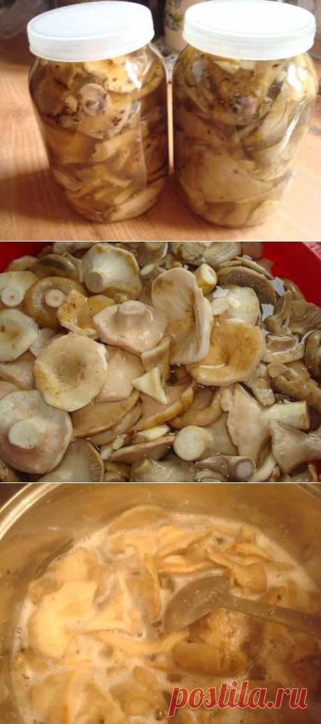 Заготовка грибов на зиму. Солим, сушим, маринуем   4vkusa.ru