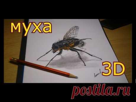 Как нарисовать 3Д рисунок мухи(ускоренное видео)How to draw a 3D drawing flies