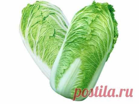 6 вкусных салатов с пекинской капустой Салаты из пекинской капусты незаменимы для здорового питания благодаря высокому содержанию в ней витаминов и растительного белка.   1. Салат «Быстро и вкусно» Ингредиенты:— капуста— свежий огурец—…